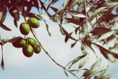 Alberi e piante nella tradizione cristiana